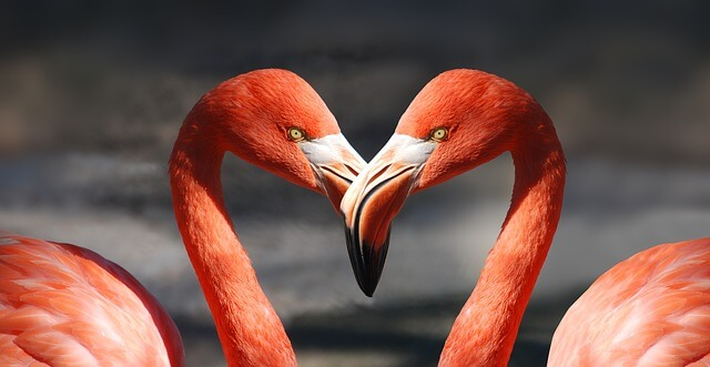 Customer Retention Strategies for Lovebirds