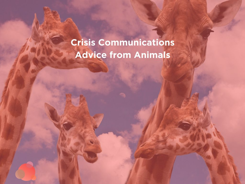 Crisis Communications Advice from Animals