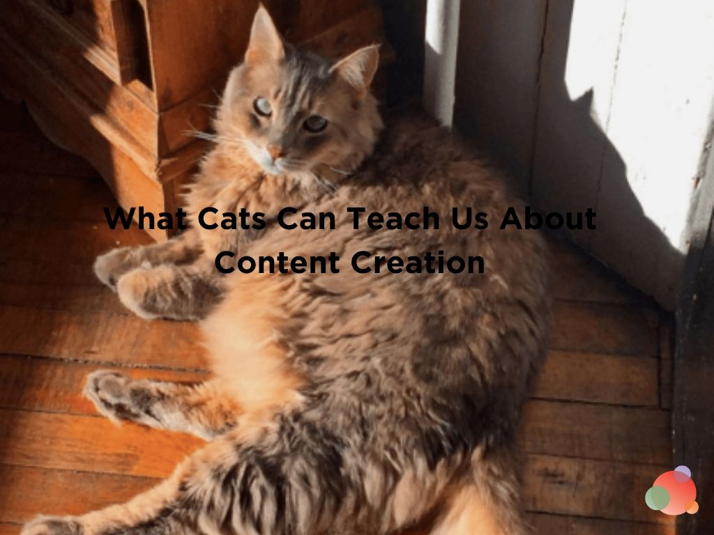 What Cats Can Teach Us About Content Creation