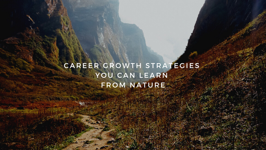 The Five Career Growth Strategies You Can Learn from Nature